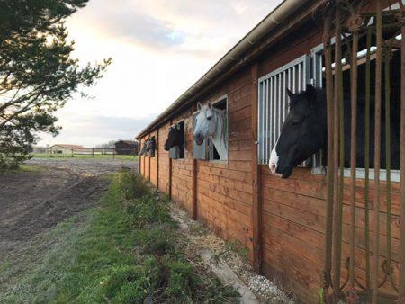 Enclos de chevaux espagnols