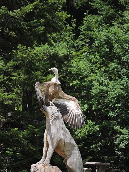 Parc des loups du Mercantour